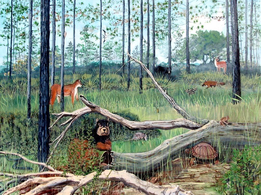 Pine Flatwoods Ecosystem
